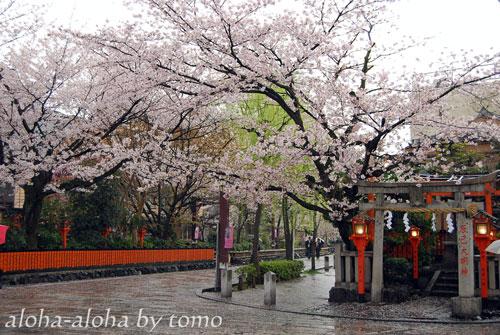 祇園白川1.jpg