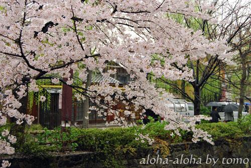 祇園白川3.jpg